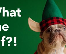 green background dog has an elf hat with ears on and has a surprised look text to the left what the elf?!